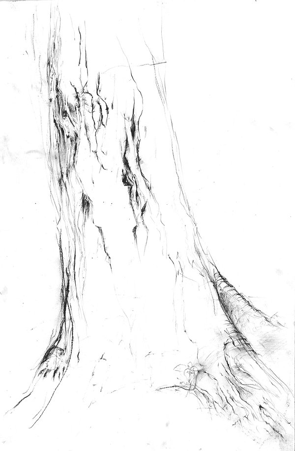 tree%20drawing%20small.jpg