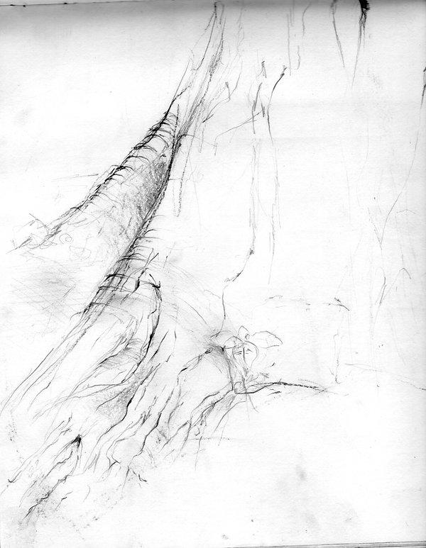 tree003sreversed.jpg