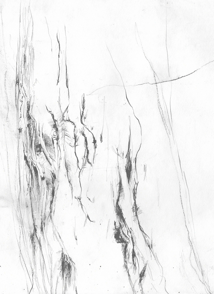 Tree2-1_edited_edited.png