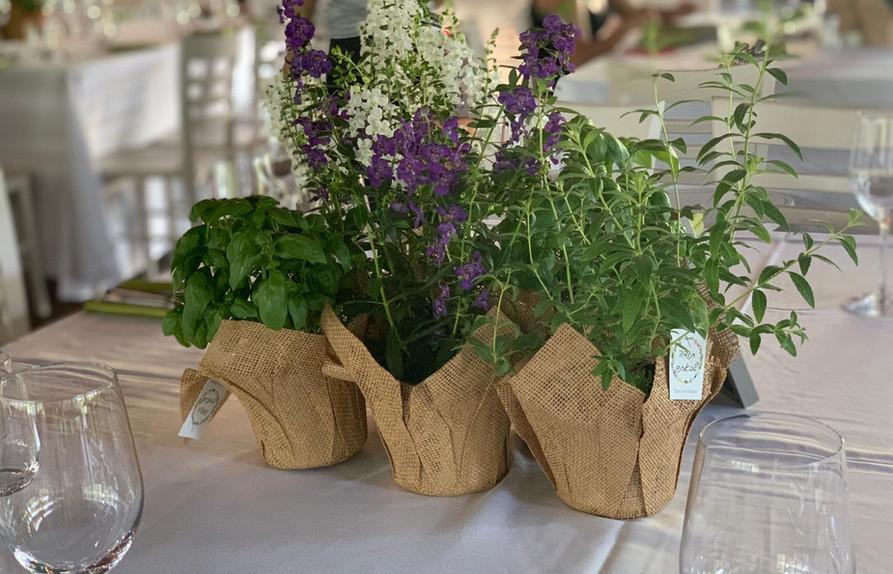 עציצים ורקפות לחתונה מחירים