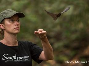 Day 21. Sky Wars: Bats vs. Birds