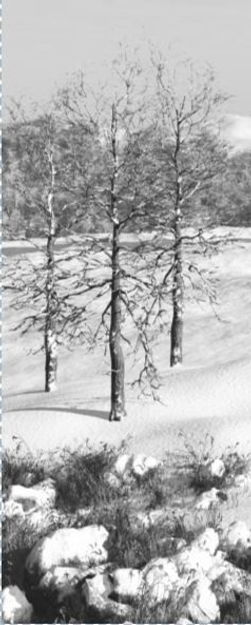Trees in snow.JPG