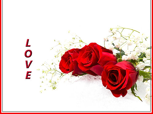 Red roses for you 8pk