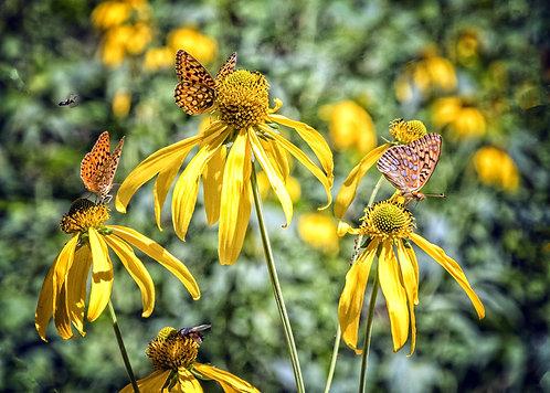 Wall Calendar 2021 Butterflies