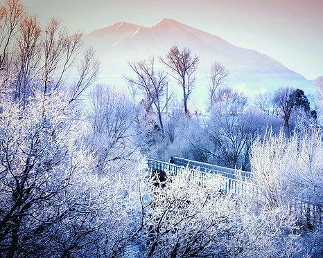 Winter Scene 11x14