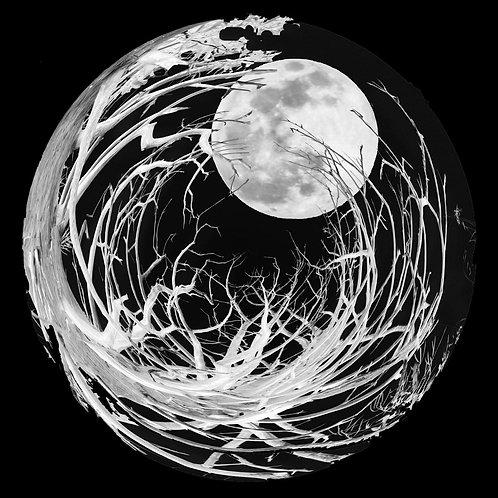 Black and white 8 x 10 photos