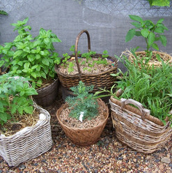 3. potted herbs.jpg