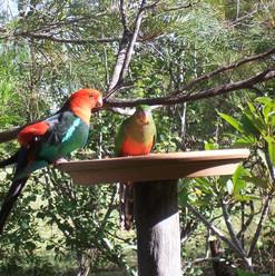 13. attracting birds to your garden.jpg