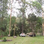 Bush camping-Peach tree, SE Qld