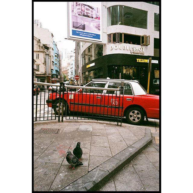 Pigeons in the 'hood ▪️▪️▪️▪️▪️▪️▪️▪️▪️▪