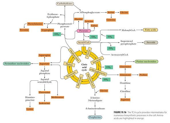 TextbookFigureSample.jpg