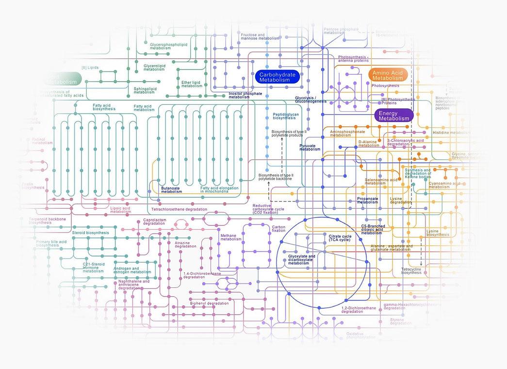 MetabolicMapSchematic.jpg