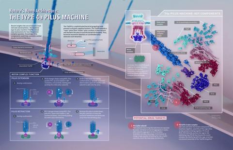 Nature's Nano-Architecture