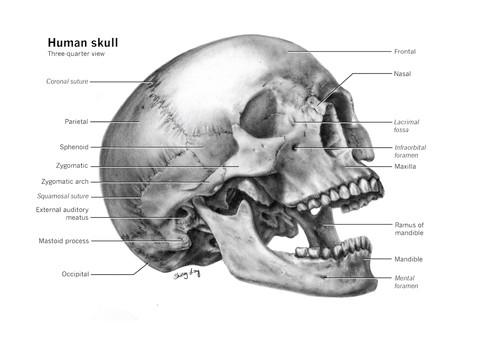 Carbon Dust Skull