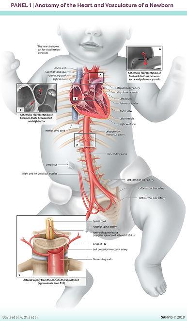 Medical Legal Visualization