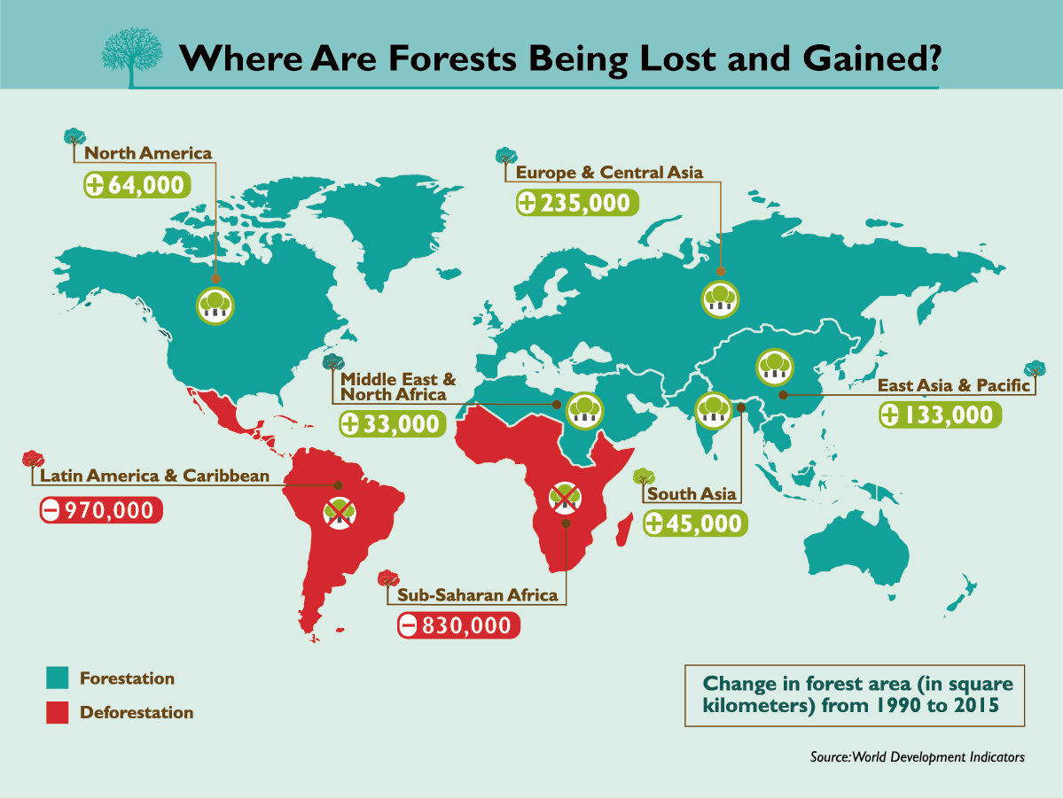 Forest exploitation infographics