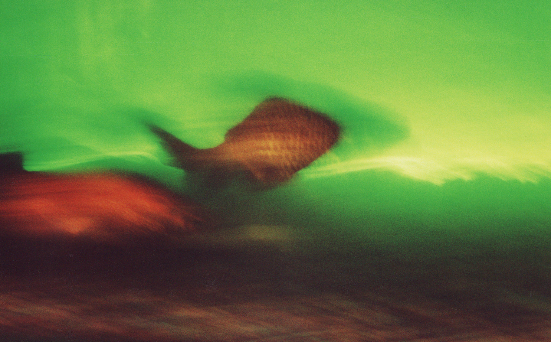 Motion Blur: Fish