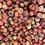 Thumbnail: Mayhaw Amaretto Pepper Jelly