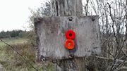 poppies on a wood fence in Ontario, Canada
