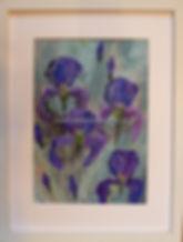 resize_wild iris (1).jpg