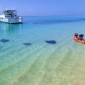 Stingray, snorkel, swim, vacation