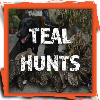 TEAL HUNTS BUTTON.png