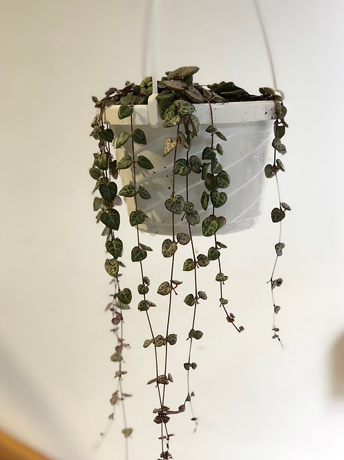 """String of Hearts (6"""")"""