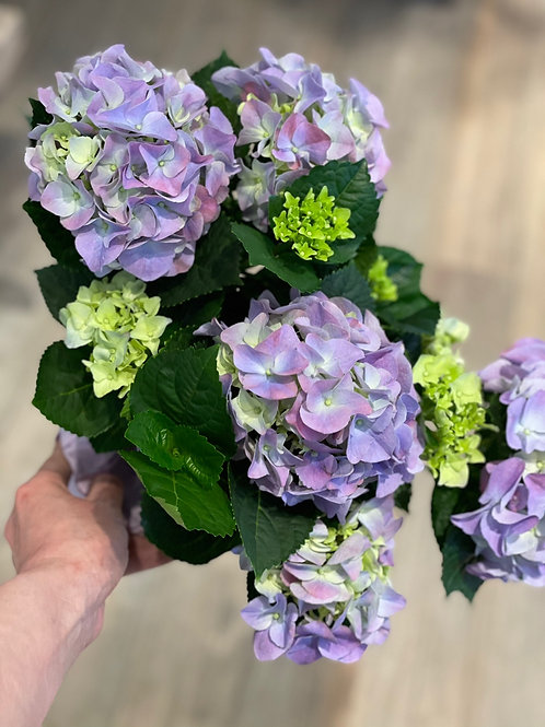"""Hydrandea 6"""" - Purple"""