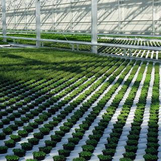 Optimal cultivation area