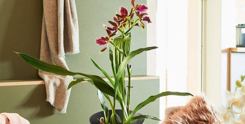 Maceta Lechuza Orchidea