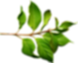 9-green-leaf-png.png