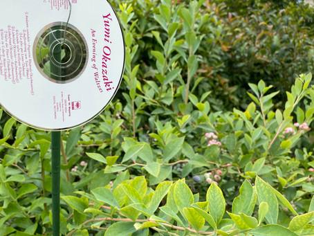 庭の木 ブルーベリー