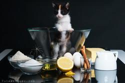 Tute Marques Fotografia- Cats and Cake - -web01.jpg