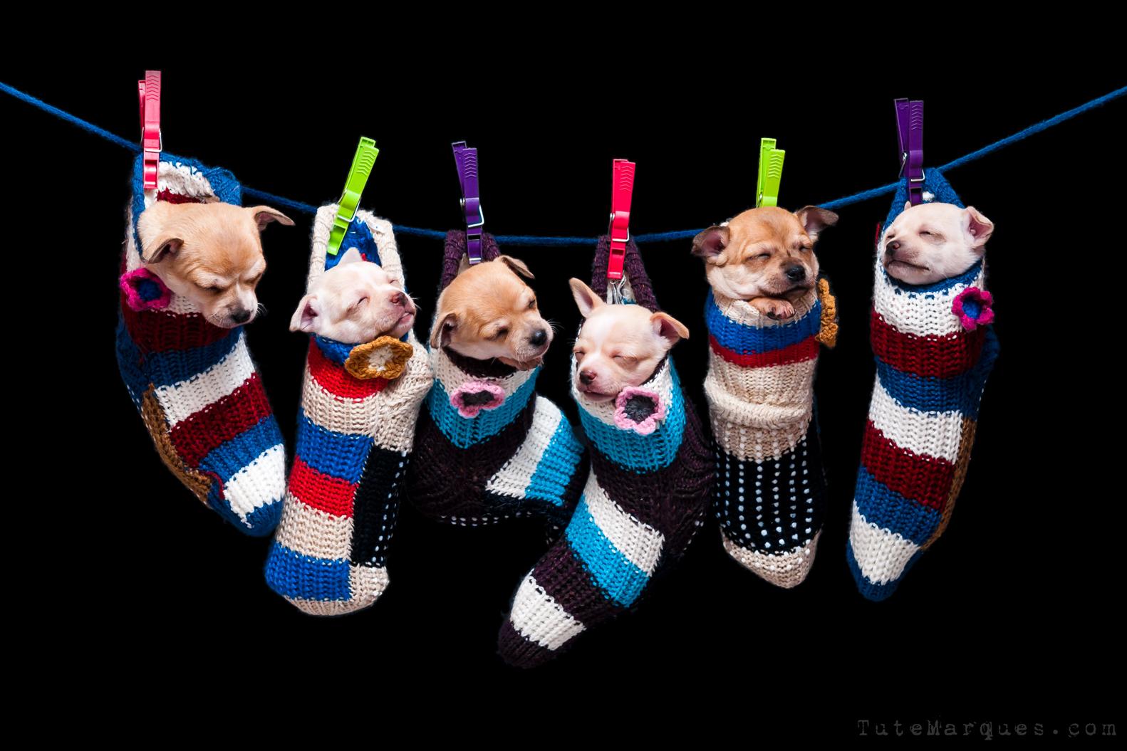 Tute Marques Fotografia- Cachorros y Calcetines - -web04.jpg
