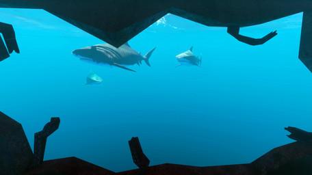 SHARKS ISLAND