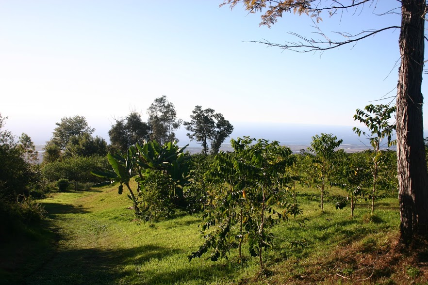 Keopu Coffee Field