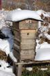 Do honeybees hibernate?