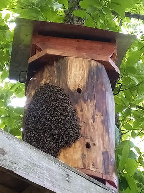 loghive with bees.jpg