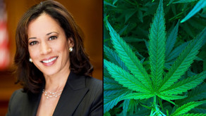 Where Vice Presidential Candidate Kamala Harris Stands On Marijuana