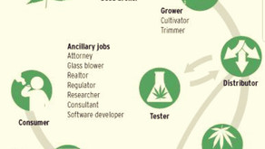 AMAZING CANNABIS INDUSTRY CAREERS!