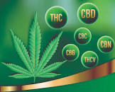 THC & COVID-19
