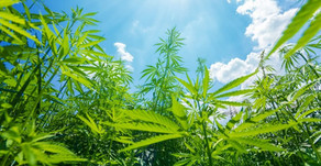 USDA Approves Hemp Plans For Maine, Missouri And Another Indian Tribe