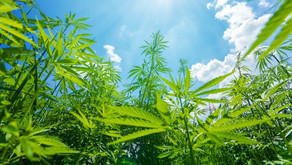 USDA Approves Hemp Plan For Maryland And One More Indian Tribe