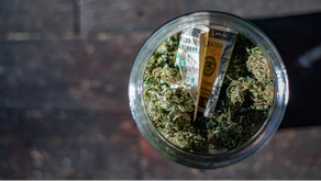 US Cannabis Sales Stay Steady