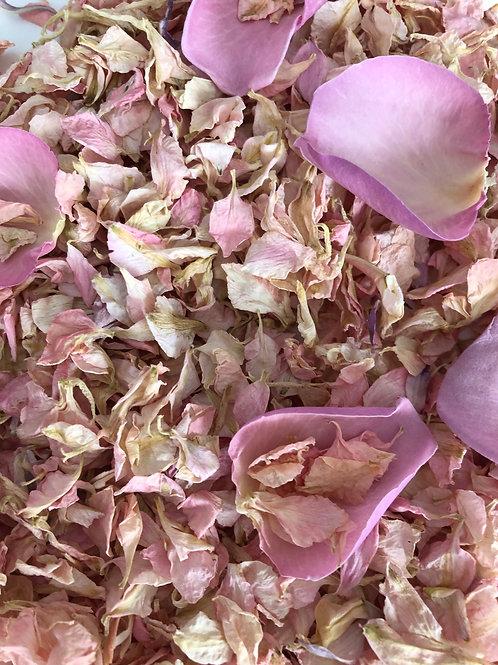 Cherry Blossom Delphinium Petals