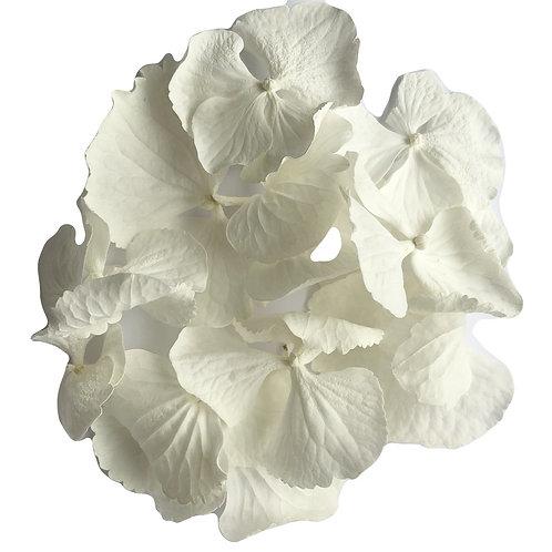 Ivory White Hydrangea Petals