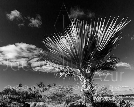 palm sun.jpg