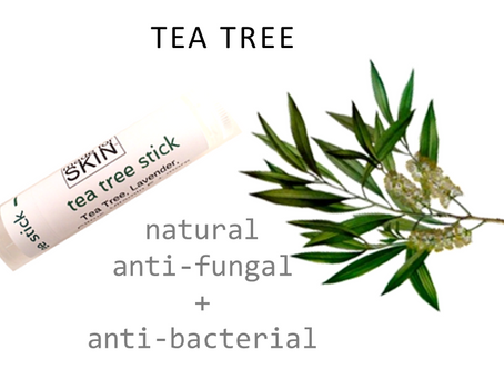 Melaleuca alternifolia - Tea Tree Oil