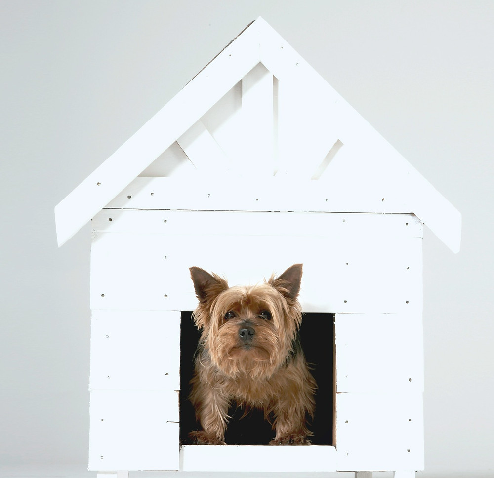 A dog looking out of its all white dog house.