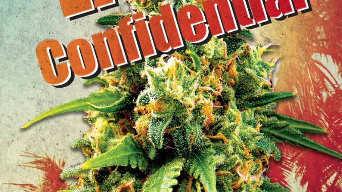 LA Confidential Indica Feminized Marijuana Seeds